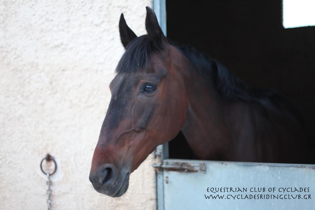 Diadora in stable